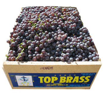 Top Brass Conventional Table Grapes